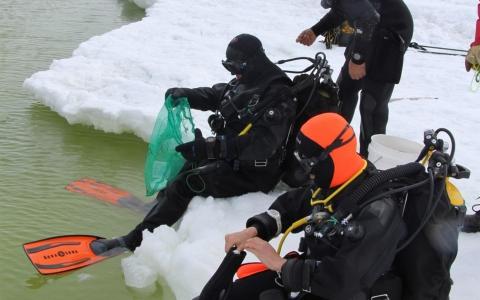 Plongeur Révolta récolte et criée à DDU