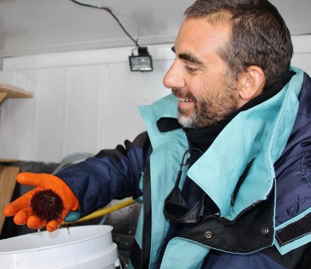 Marc dépose dans la bac un Sterechinus (oursin groupe des Echinodermes)